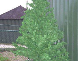 kerstboom #2